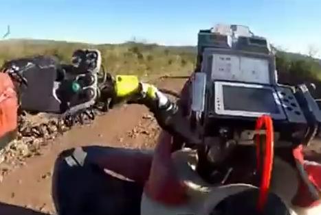 Choca con su quad de frente con una vaca