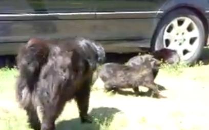 Varios perros paran una pelea entre gatos
