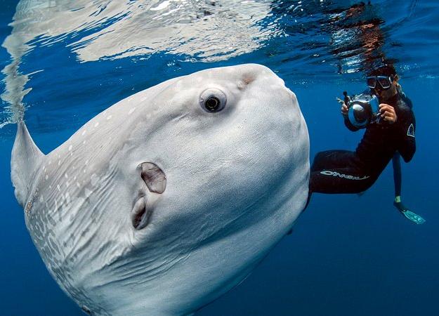 Fotografías de un pez luna gigante con aspecto de alien