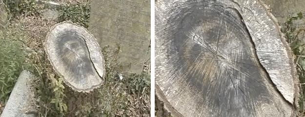 El rostro de Jesucristo aparece en un tronco del cementerio de Belfast