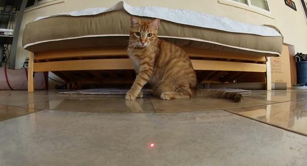 Vídeo grabado con una GoPro de varios gatos persiguiendo a un láser