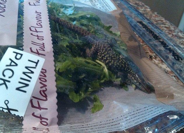 Un hombre encuentra un lagarto dentro de una bolsa de lechuga cuando iba a hacer un sandwich