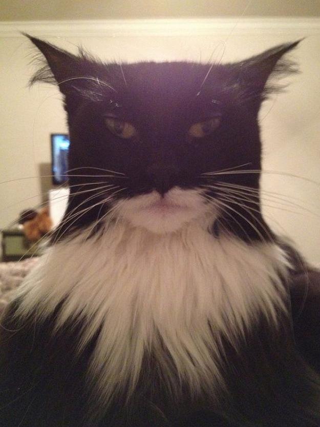 ¿Batman o Catman?