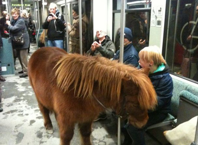 Resultado de imagen para animales metro