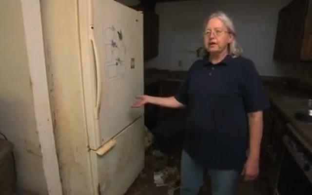 Una mujer guardaba 100 gatos muertos dentro del congelador
