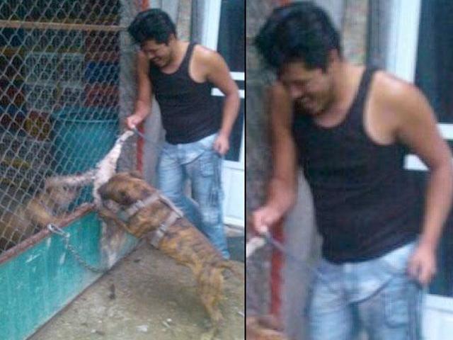 Buscan en México a hombre que difundió imágenes de perros destrozando gatos vivos