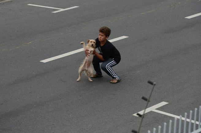 Un niño de 11 años rescata a un perrito atropellado en medio de una carretera muy transitada de Brasil