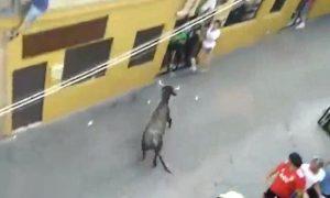 mujer-muere-cornada-vaquilla-murcia