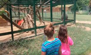 babuino-lanza-mierda-ninas