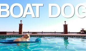 boat-dog