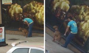 hombre-fuerza-perro-sentarse-punetazos