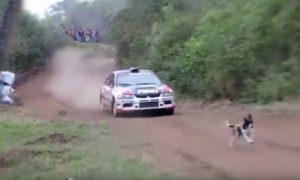 perro-casi-atropellado-rally-codasur-2016
