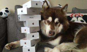 coco-perro-magnate-chino-8-iphone-7-1
