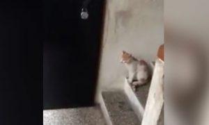 gato-llama-puerta