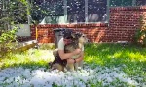perro-nieve-ultima-vez-1