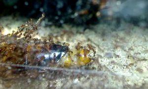 hormigas-de-fuego-cucaracha