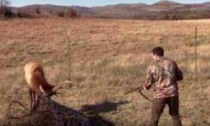 cazador-ayuda-ciervo-atrapado-alambre-disparo