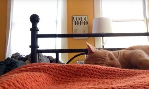 venganza-gato-maulla
