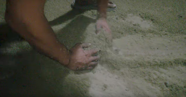 Parece un montón de arena, pero no... ¡son mosquitos!