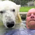 El único hombre en la Tierra que puede bañarse tranquilamente con un oso polar