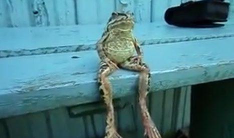 Una rana sentada en un banco como una persona