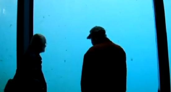 Un oso polar tira una piedra al cristal de su acuario