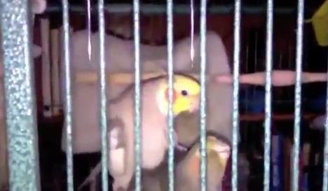 Un pájaro silba la canción de la victoria después de tener sexo
