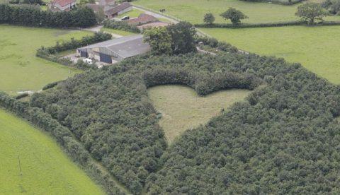 Un hombre creó un bosque de robles en forma de corazón en honor a su esposa