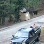 Un hombre ayuda a tres cachorros de oso pardo a salir de un contenedor