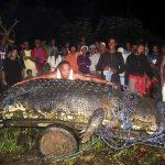 El cocodrilo más grande del mundo pesa 1.076 kilos