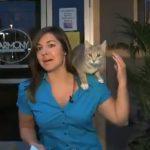 Un gato callejero se sube al hombro de una reportera en directo