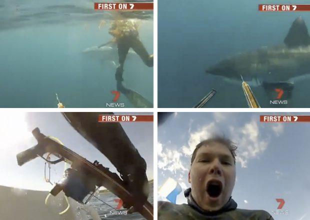 Unos buzos se encuentran con un gran tiburón blanco y se defienden con sus arpones