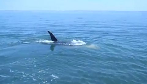 Unos chicos graban como un tiburón se come a otro tiburón