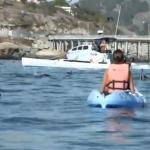 Una ballena jorobada le da un susto a dos mujeres que iban en kayak