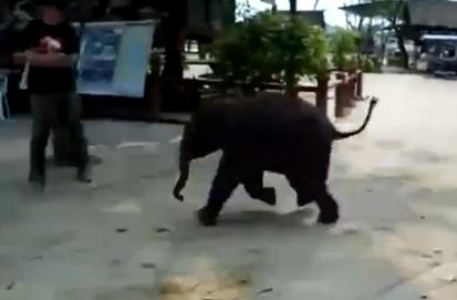 Un bebé elefante muy miedoso
