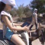 Los burros de un parque temático de Israel proporcionan Wi-Fi gratuito a los visitantes