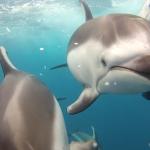 Un chico graba unas impresionantes imágenes de un grupo de delfines bajo el agua con su cámara GoPro