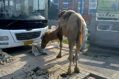 Un hombre de 87 años vive con un camello en la calle