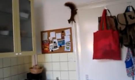 Una ardilla atrapada en la cocina consigue escaparse volando