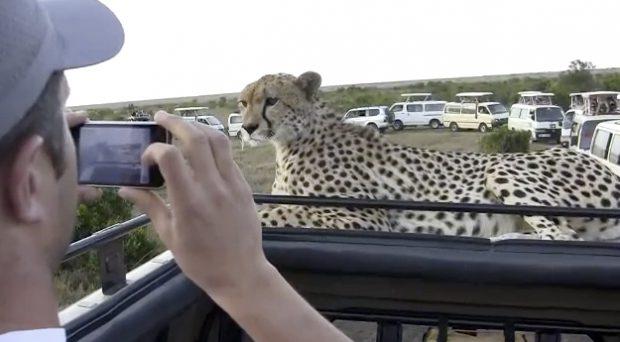 Cara a cara con un guepardo en Kenia
