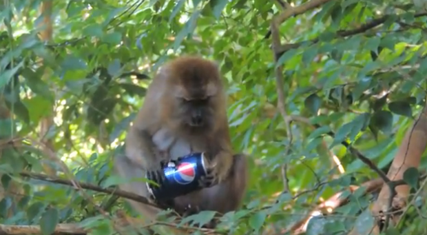 Un mono le roba la Pepsi a unos turistas