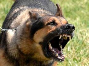 Un perro ataca a un hombre que estaba maltratando a su exmujer y a su hija menor