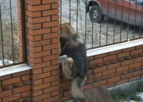 La versión canina de Prision Break