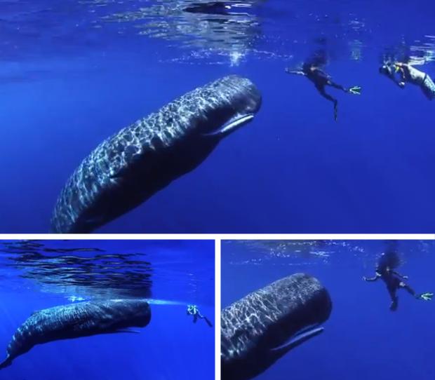 Mágico encuentro con una ballena