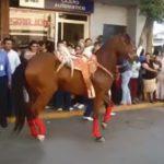Un caballo bailando el Gangnam Style de PSY