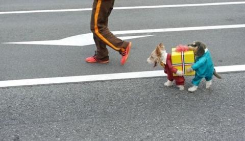 Disfraz de dos perros llevando un regalo