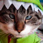 Spangles, el gato bizco más famoso del mundo