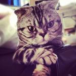El gato Shishi, la nueva estrella de Instagram