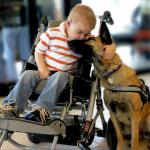 Lucas, un niño con una enfermedad terminal, se reúne con Juno, su perro de asistencia