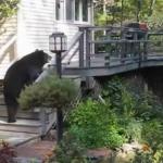 Una mujer echa a un oso del porche de su casa a gritos